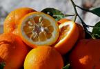 arancio-amaro